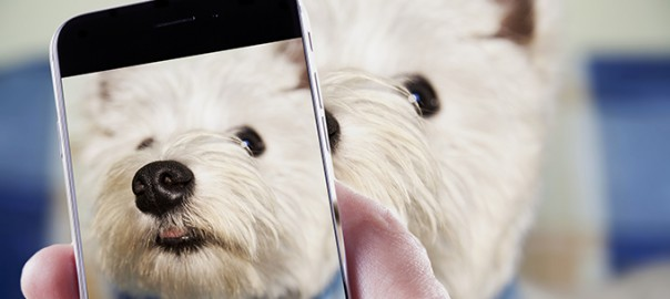 3 trucos infalibles para fotografiar a tu mascota
