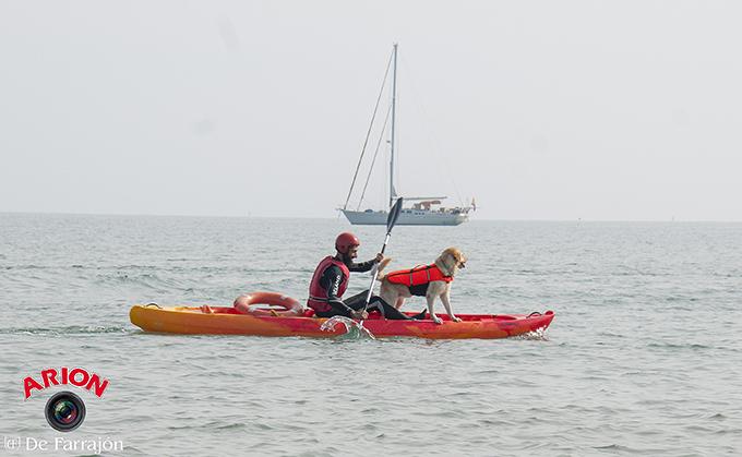 Salvamento acuático con perros