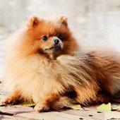 ¿Tienes un perro miniatura y es caprichoso para comer?