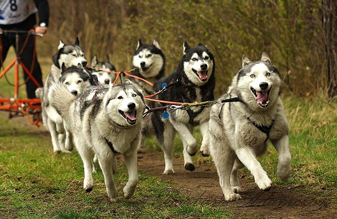 3 cosas que debes saber para practicar deporte con tu perro