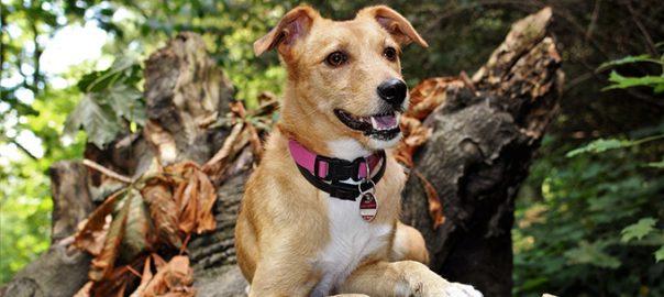Cuidados del perro en otoño. Lo que hay que saber