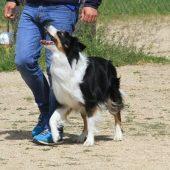 La Obediencia Canina, un deporte muy beneficioso para tu perro