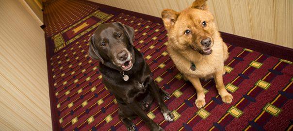 ¿Qué significa Petfriendly?
