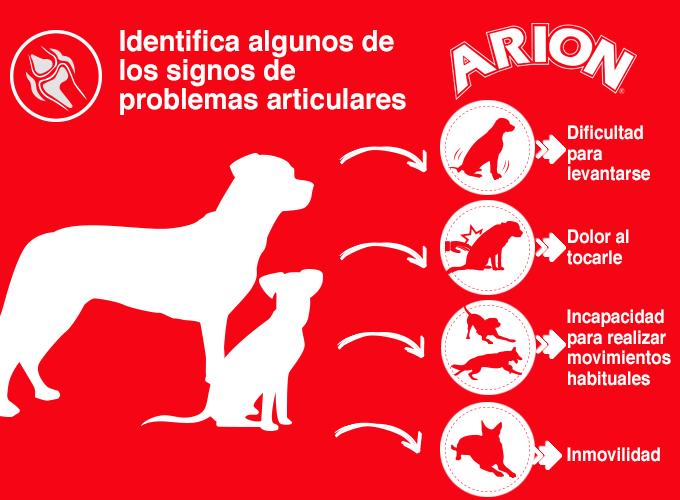 Problemas de movilidad del perro