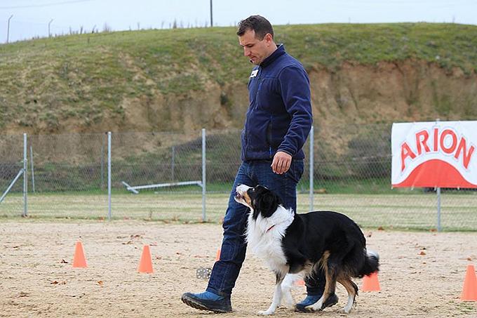 la obediencia canina
