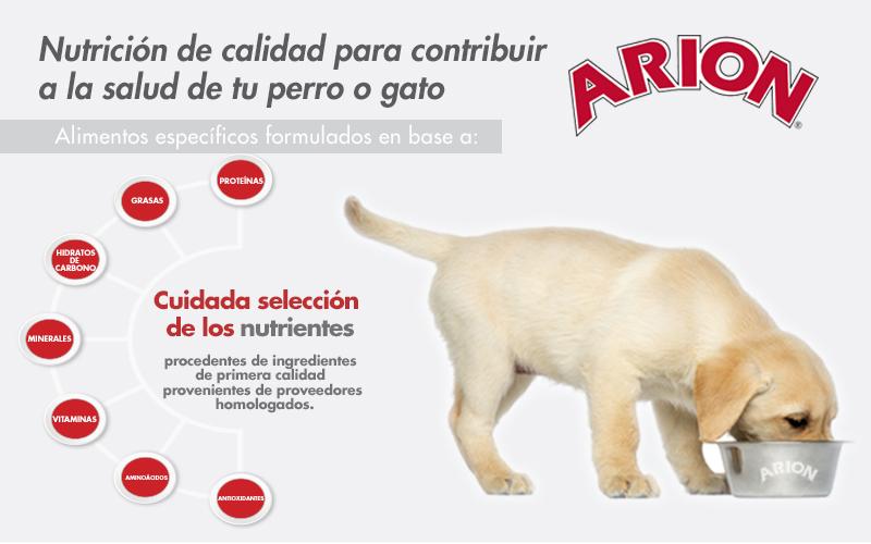 Sobre la alimentación de las mascotas