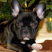 5 consejos navideños para tu mascota