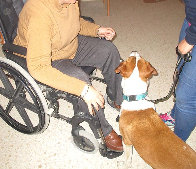 La terapia asistida con perros vista desde dentro