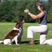 Habilidad Canina: un deporte para practicar en casa