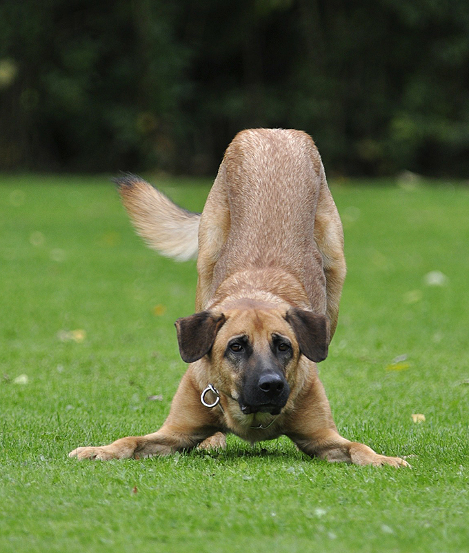cómo comunicarte con tu perro