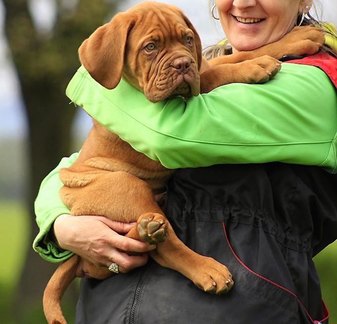¿Tu perro es tímido? 3 consejos para ayudarle