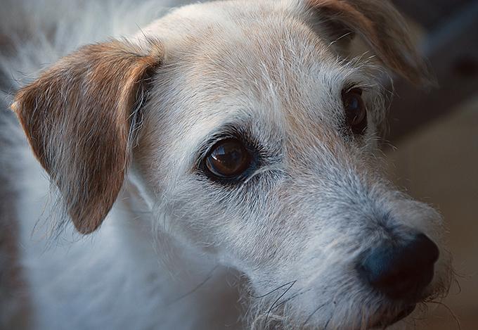 La alimentación del perro de edad avanzada: las 3 claves