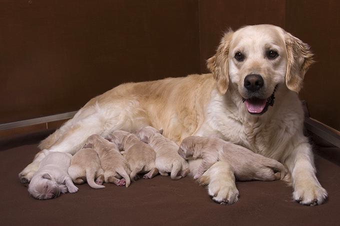 enfermedades de la sangre en los perros