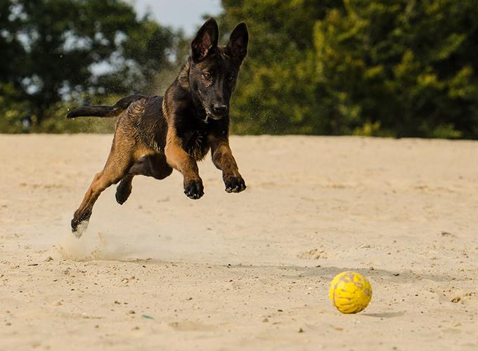 hidratos de carbono beneficiosos para el perro