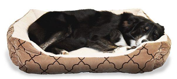 El embarazo psicológico en la perra: 3 cosas importantes