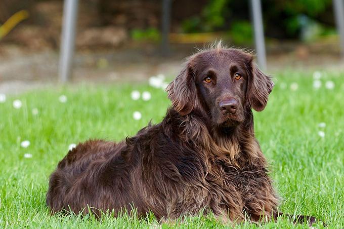 Las garrapatas: un serio peligro para la salud de tu perro
