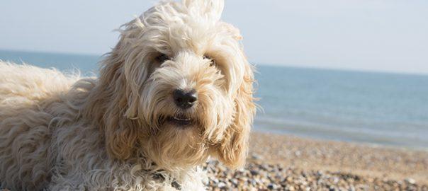 6 consejos top para mantener fresco a tu perro en verano