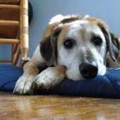 Problemas gastrointestinales de tu perro en verano