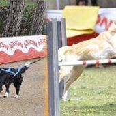 Tu perro practica ejercicio ¿anaeróbico o aeróbico?