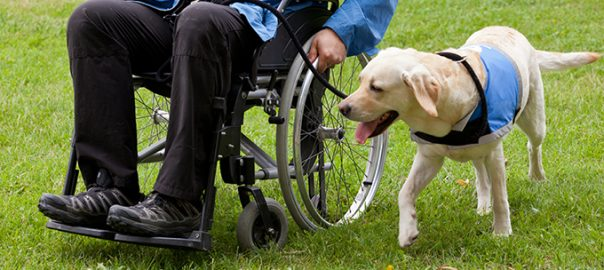 Perros de asistencia: una labor extraordinaria