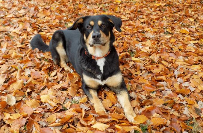 Cómo cuidar de tu perro en otoño: los 3 consejos básicos