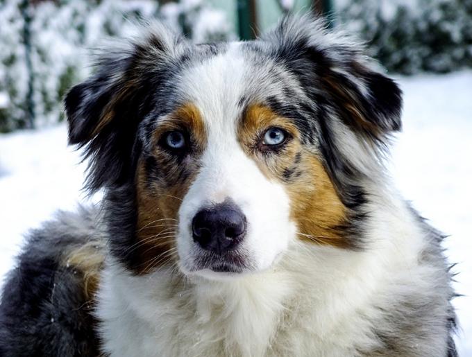 Diccionario de términos caninos