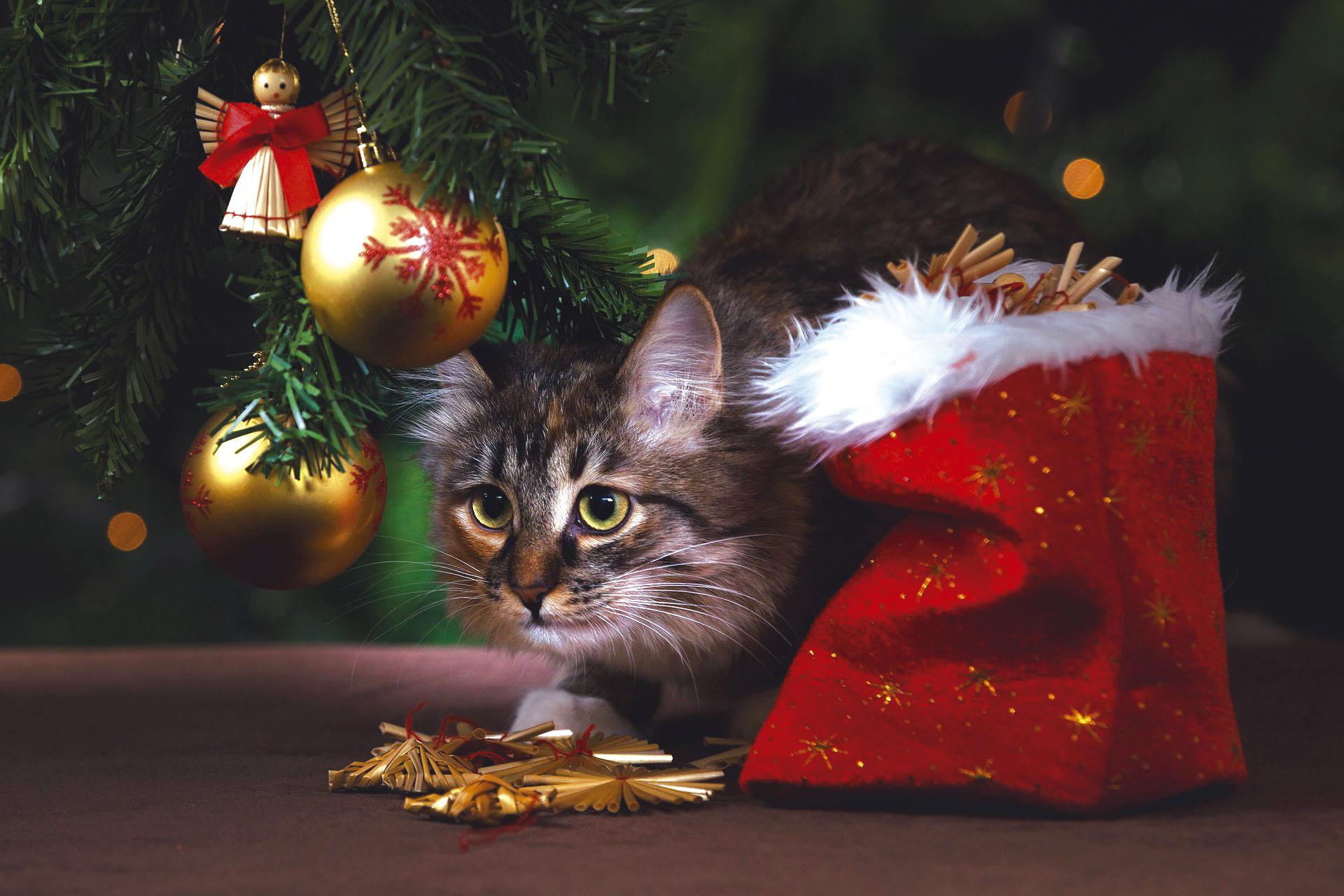 navidad con mascota