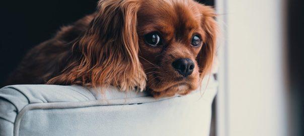 puppy-2592307_960_720-604x270.jpg