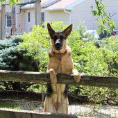 perro escapa